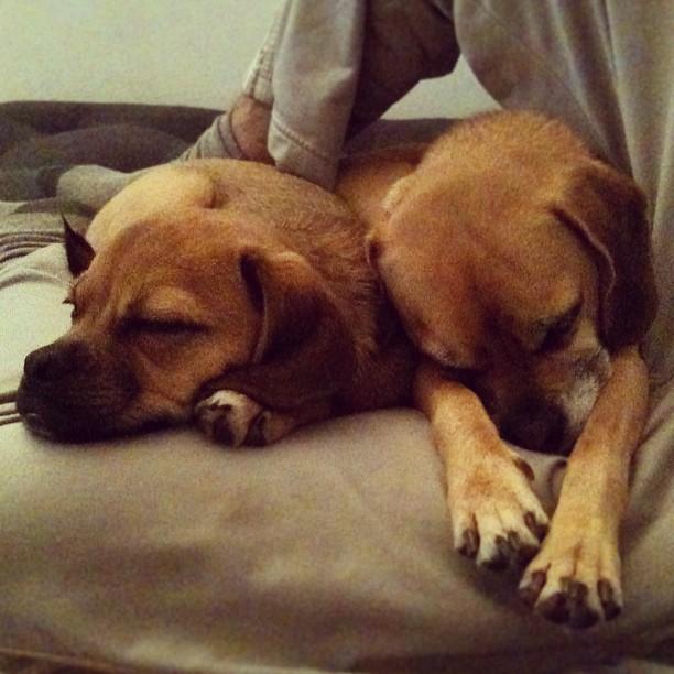 Couch Cuddling