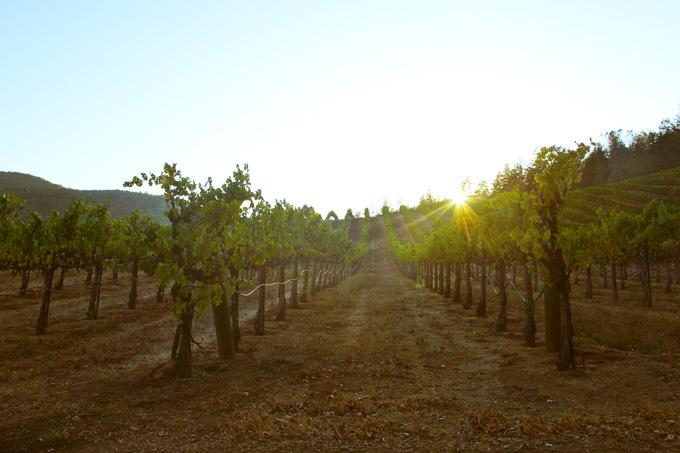Dry Creek Road, Sonoma CA | picklesnhoney.com #PHroadtrip #roadtrip #travel